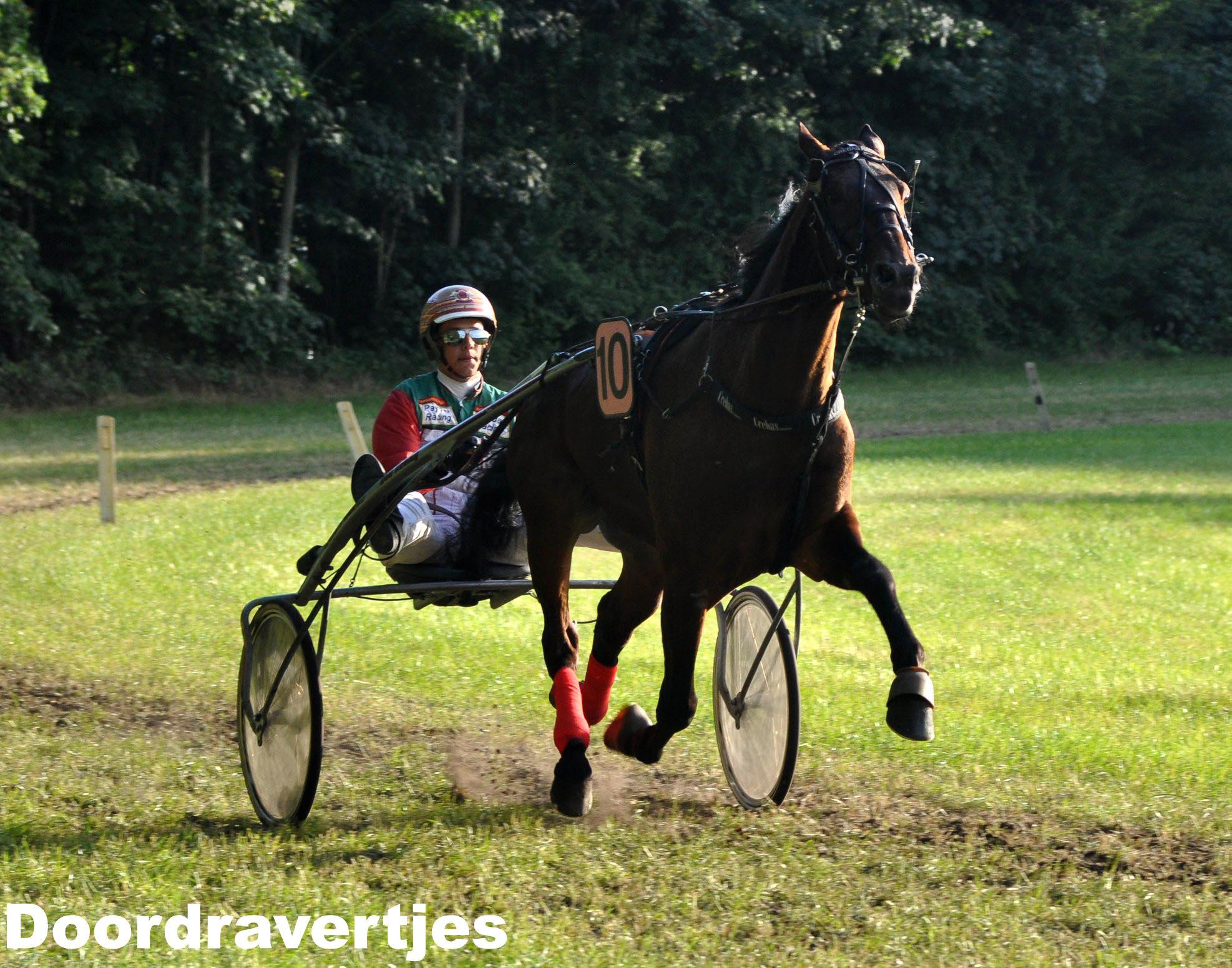 Grasbaanstanden, Hampshire F Boko beste paard